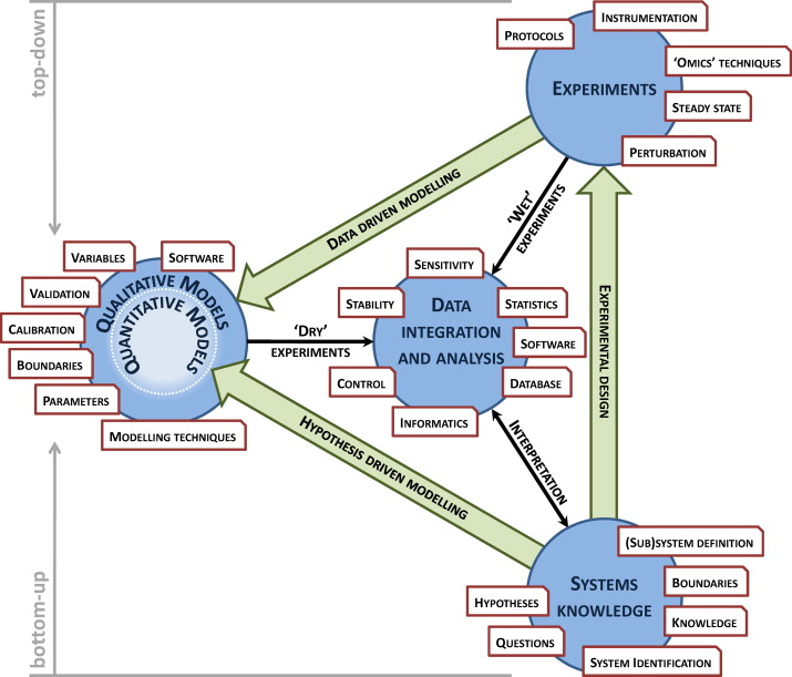 Where systems biology meets postharvest sciencedirect schematic outline of the systems biology work flow the top down approach relies on a holistic data driven modelling approach while the bottom up approach ccuart Images