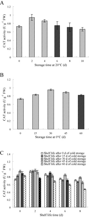 changes in fruit catalase activity cat at 20a c a