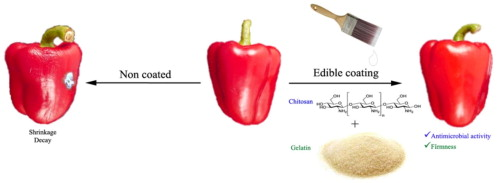 effects of a composite chitosan gelatin edible coating on