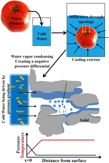 Mechanistic understanding of temperature-driven water and bacterial
