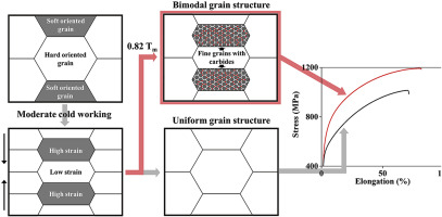 Bimodal grain-structure formation in a Co–Cr-based superalloy during