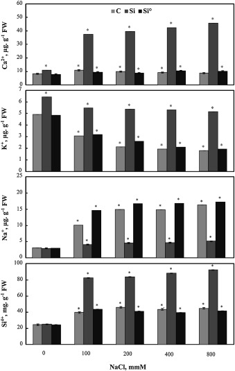 Effect of silica ions and nano silica on rice plants under salinity