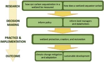 Carbon Sequestration In Wetlands From Science To Practice An