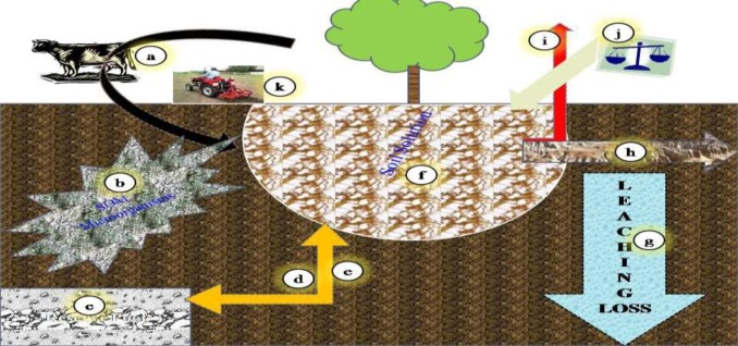 Plant beneficial rhizospheric microorganism (PBRM