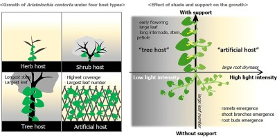 Shade and physical support are necessary for conserving the