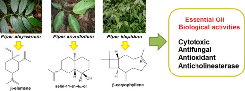 Essential oils of Amazon Piper species and their cytotoxic
