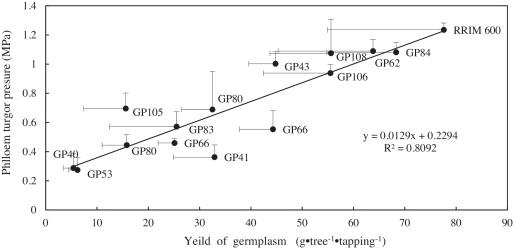 Variation Of Phloem Turgor Pressure In Hevea Brasiliensis An