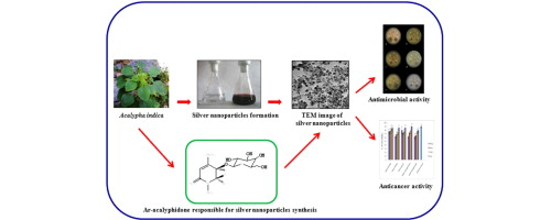 Plant extract synthesized silver nanoparticles: An ongoing