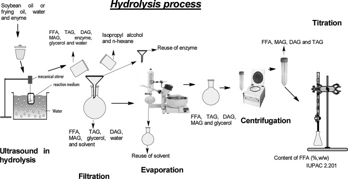 Enzymatic Hydrolysis Of Soybean And Waste Cooking Oils Under