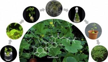 In vitro rapid regeneration through direct organogenesis and