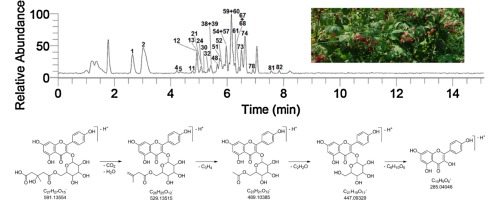 Phenolics Composition Of Leaf Extracts Of Raspberry And Blackberry