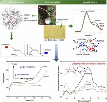 Novel approach to determine non-rubber content in Hevea brasiliensis