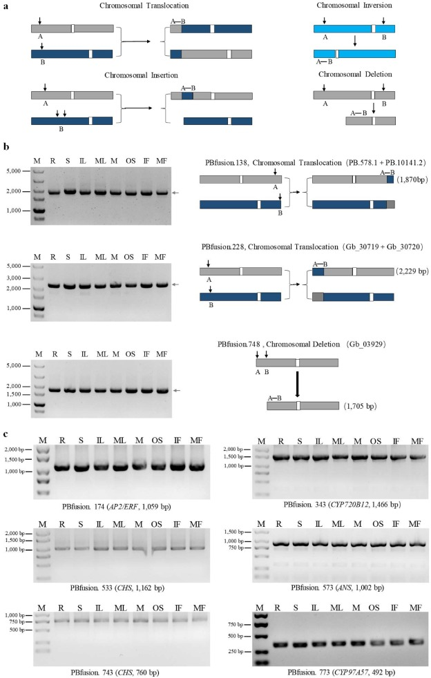 A global survey of full-length transcriptome of Ginkgo biloba