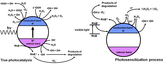 Schematic representations of the possible mechanisms of degradation of rhodamine ...