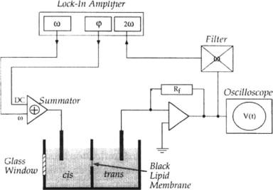 Strange Black Lipid Membrane An Overview Sciencedirect Topics Wiring 101 Archstreekradiomeanderfmnl