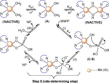 Metal-promoted hydrolysis of bis(p-nitrophenyl)phosphate by