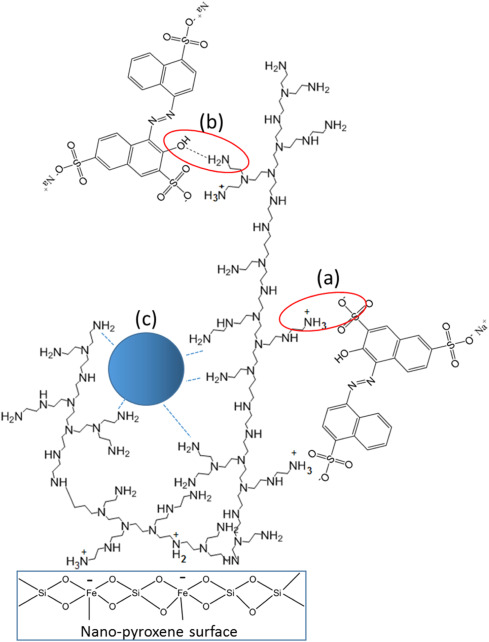 Preparation And Characterization Of Polyethylenimine Functionalized