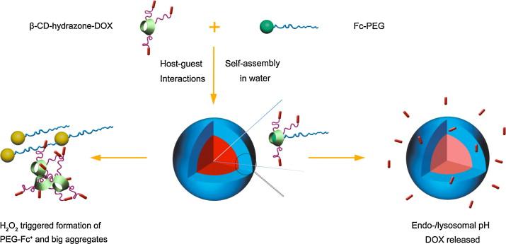 pH and hydrogen peroxide dual responsive supramolecular prodrug ...