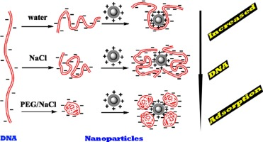 b9245a5b0 Promoting DNA loading on magnetic nanoparticles using a DNA ...