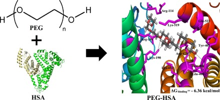 hydrophobic and hydrophilic interactions in proteins