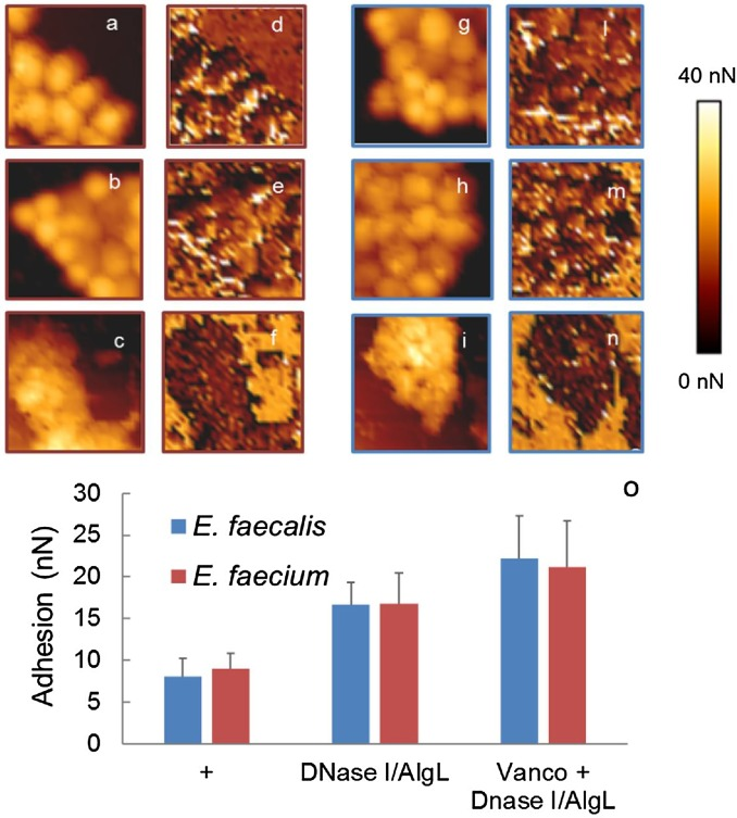 Different effects of matrix degrading enzymes towards biofilms