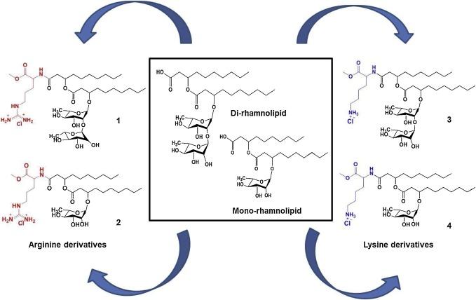 Rhamnolipids functionalized with basic amino acids
