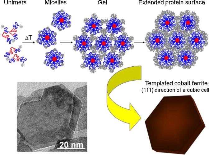 Novel magnetic nanomaterials inspired by magnetotactic
