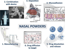 Opportunity and challenges of nasal powders drug formulation and graphical abstract malvernweather Image collections