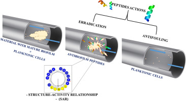 Peptides as a strategy against biofilm-forming microorganisms