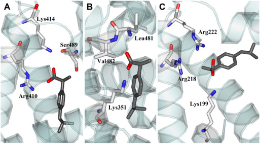 cdfb729f08 Stereoselective and domain-specific effects of ibuprofen on the ...