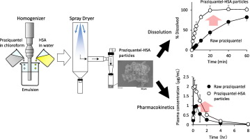Enhanced dissolution and oral bioavailability of