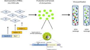 human papillomavirus vaccine virus)