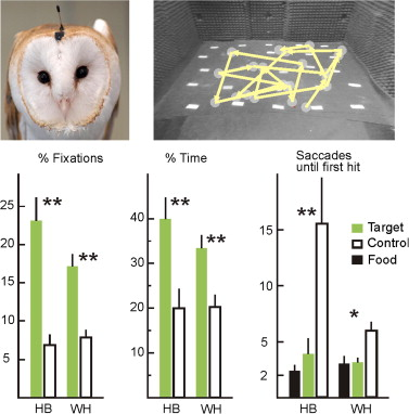 bcedb6df Neuroethology of prey capture in the barn owl (Tyto alba L ...