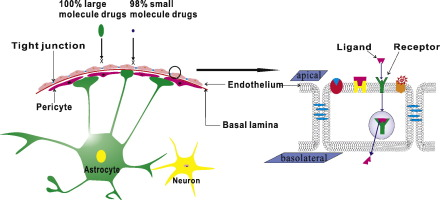 Non-invasive approaches for drug delivery to the brain based on ...