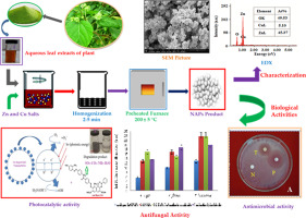 Green synthesis of ZnO and Cu-doped ZnO nanoparticles from