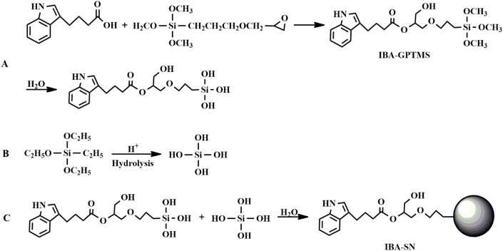 Preparation and characterization of indole-3-butyric acid