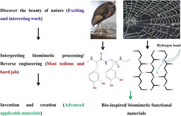 Recent exploration of bio-mimetic nanomaterial for potential