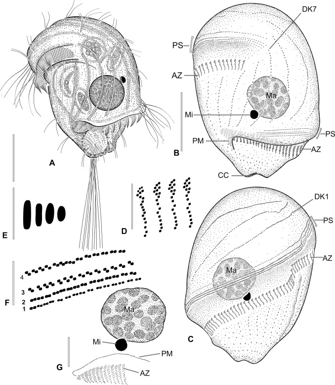 Morphologic And Molecular Characterization Of Seven Species Of The