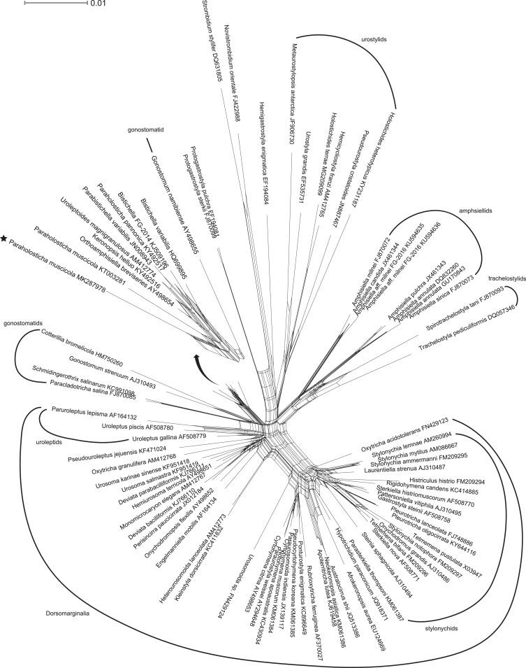 monographic treatment of paraholosticha muscicola ciliophora 56 Continental Mark II download full size image