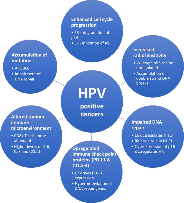human papillomavirus and related cancers
