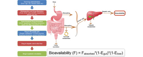 Food Gastrointestinal Ph And Models Of Oral Drug Absorption Sciencedirect