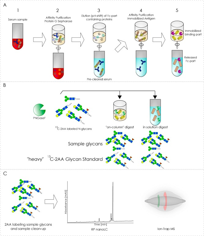 N-glycans of complex glycosylated biopharmaceuticals and ... on