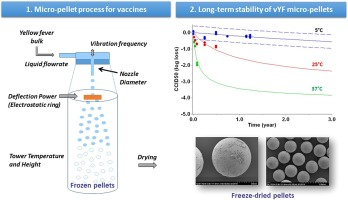A spray freeze dried micropellet based formulation proof-of