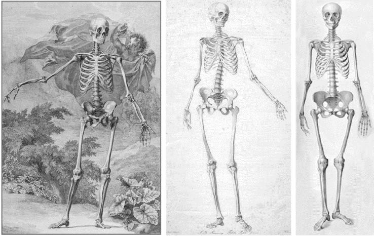 Attic perfection in anatomy: Bernhard Siegfried Albinus (1697–1770 ...