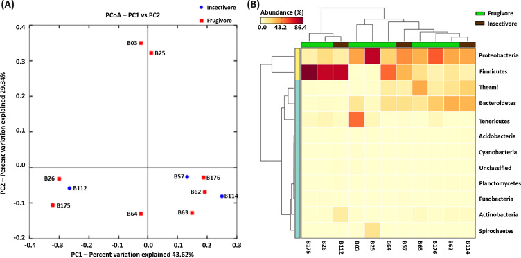 Bacterial diversity indicates dietary overlap among bats of a pcoa plot indicating that bacterial diversity in insectivorous bats is not much different than frugivorous bats all three insectivorous bats blue ccuart Image collections