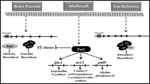 Modulation of genetic clusters for synthesis of bioactive