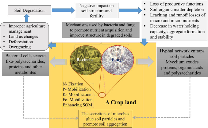 Bacteria and fungi can contribute to nutrients