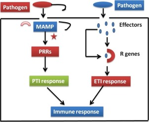 Pathogenesis Related Proteins And Peptides As Promising Tools For