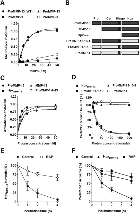 MMP-13 is constitutively produced in human chondrocytes and co ... 32248ac3f3