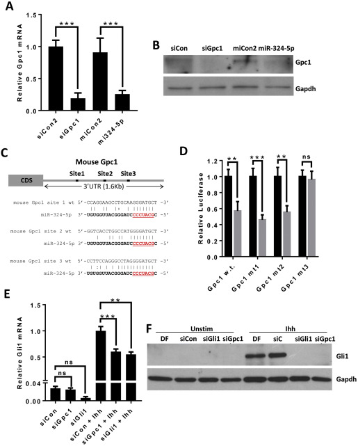 miR-324-5p is up regulated in end-stage osteoarthritis and
